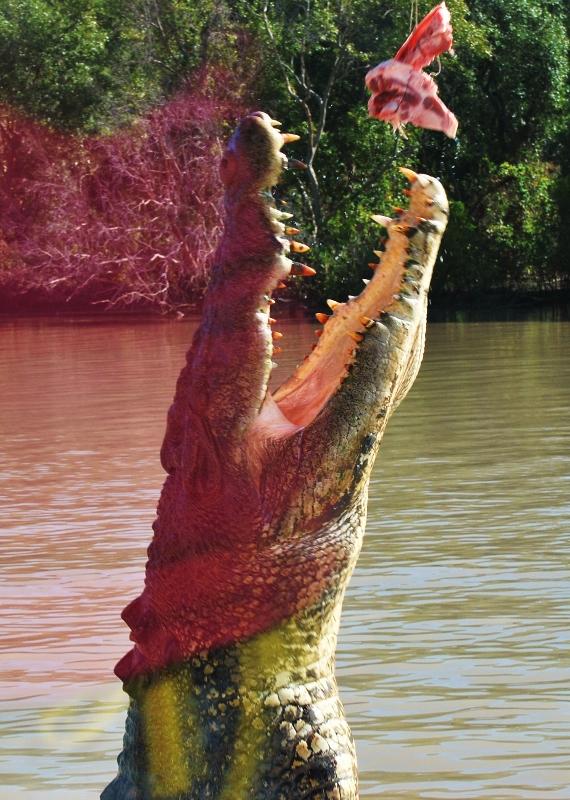 Hyppivät krokotiilit