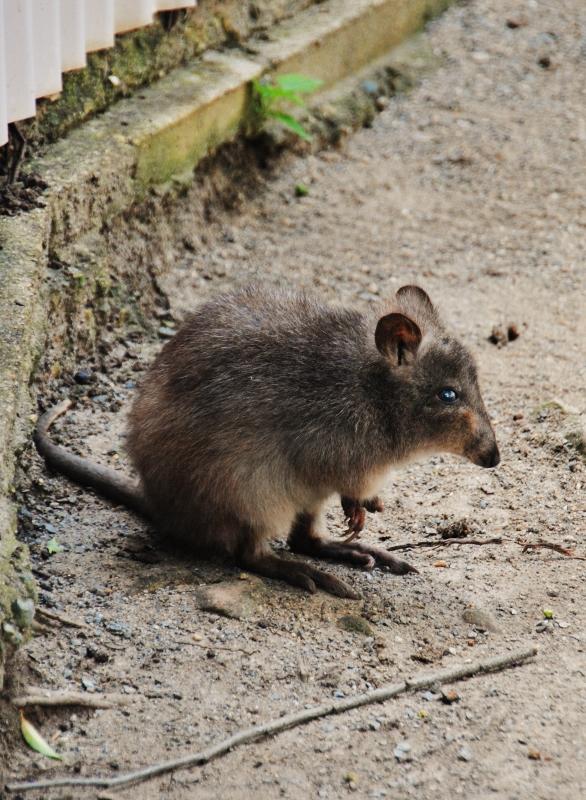 Australian omituisia otuksia Cairnsin eläintarhassa