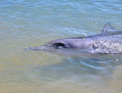 Aika unohtaa unelma delfiiniuinnista? #ReilutBlogit