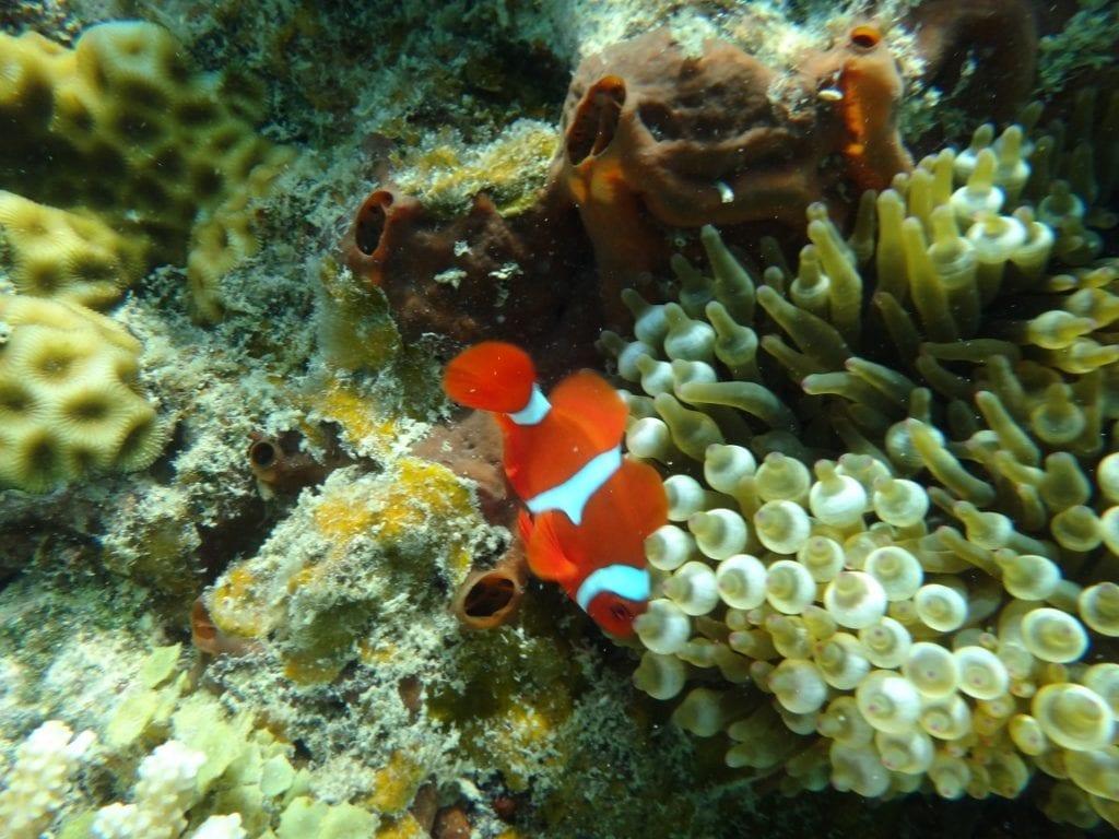 Nemo. Green Island, Cairns