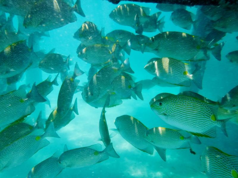 Great Barrier Reef, Green Island