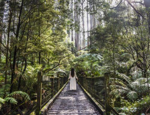 Luonnon rauhassa Melbournen Dandenongsin vuoristossa