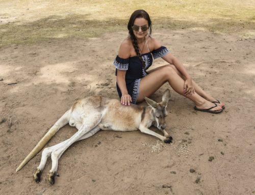 Brisbanen Lone Pine Sanctuary – Koala kainaloon ja seuraava!